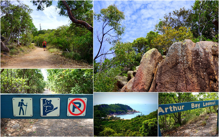 The Forts Walk on Magnetic Island in search of koalas
