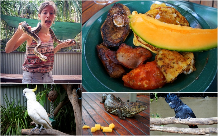 Champagne Bush Tucker Breakfast at Bungalow Bay Koala Village in Magnetic Island