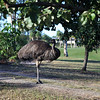 PacificHarbour_16Emu_5559
