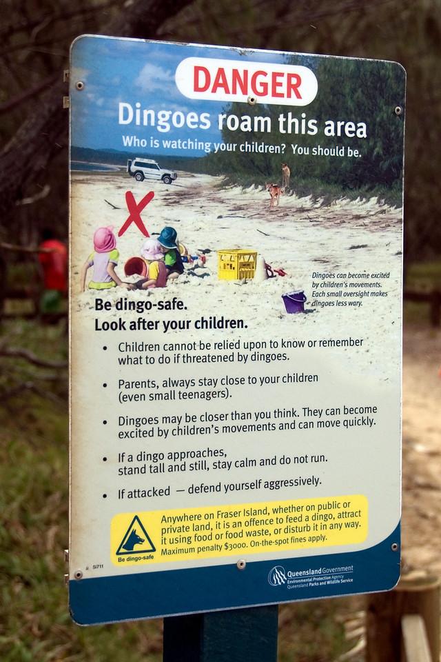 Dingo Sign, Fraser Island - Queensland, Australia