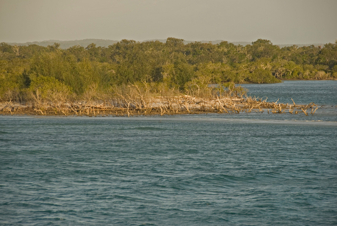 Trees and Beach, Fraser Island - Queensland, Australia