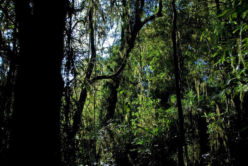 Sunlight in Forest 2, Springbrook National Park - Queensland, Australia