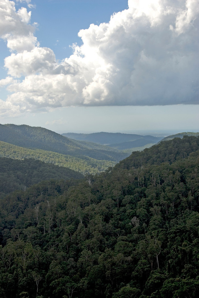 Vista 2, Springbrook National Park - Queensland, Australia
