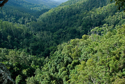 Treetops 2, Springbrook National Park - Queensland, Australia