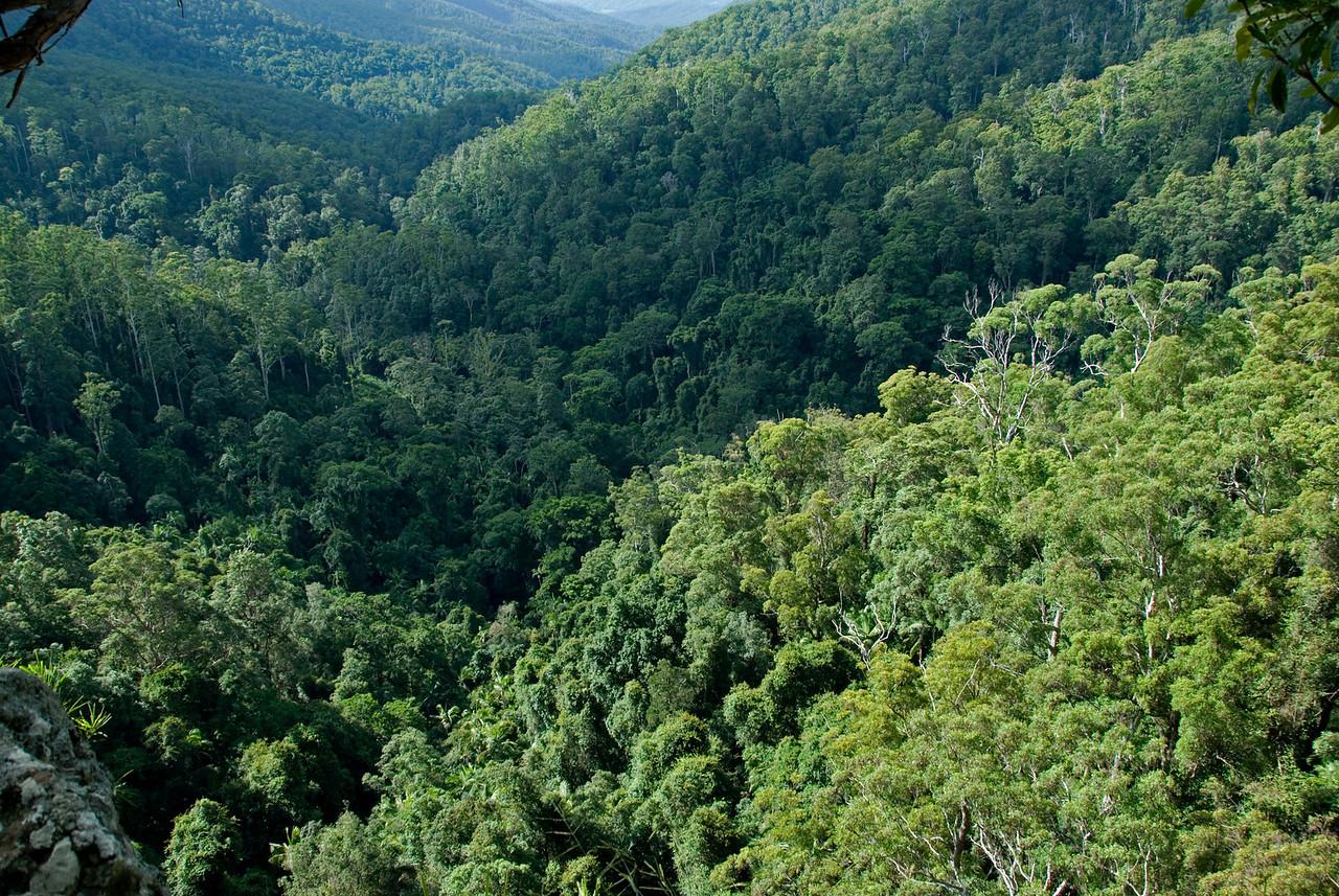 Treetops 2, Springbrook National Park - Queensland, Australia