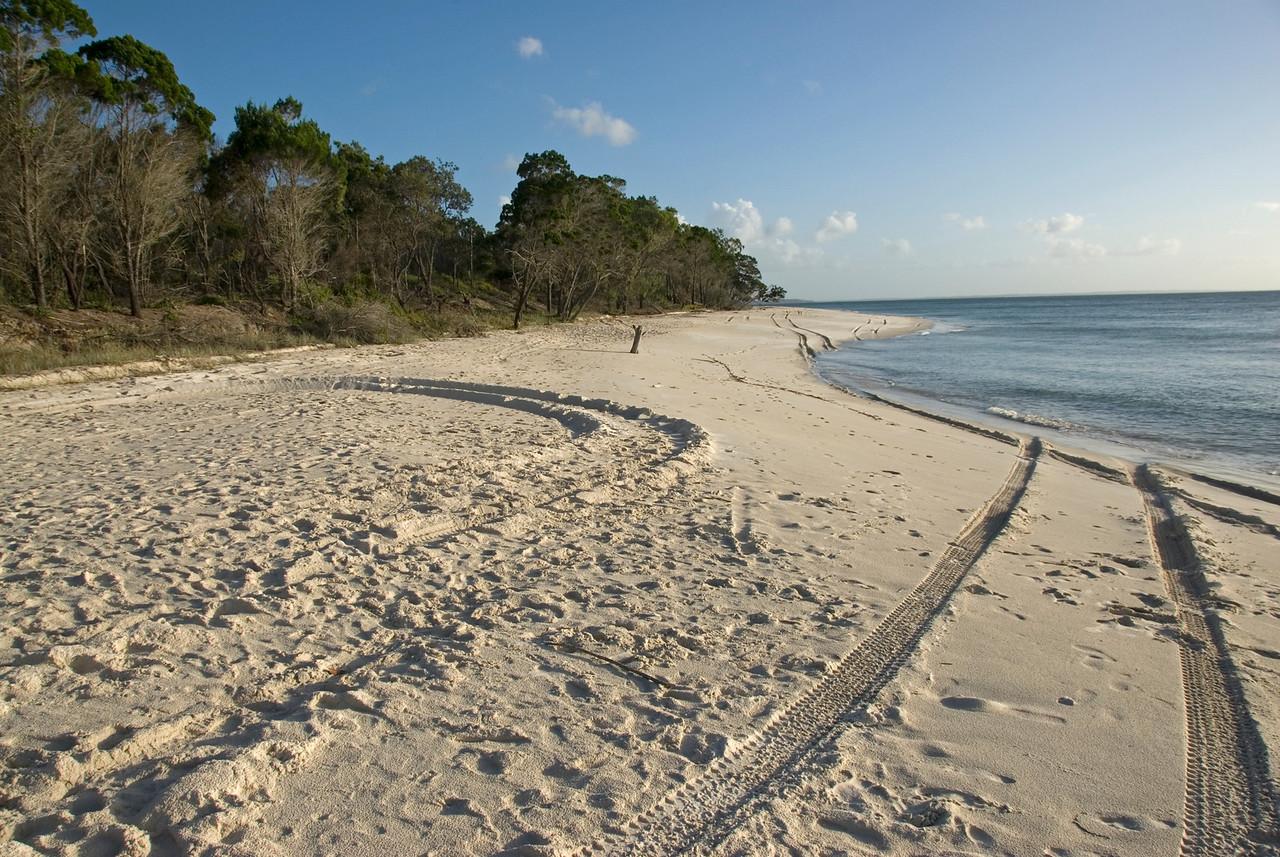 Tire Tracks on Beach, Fraser Island - Queensland, Australia