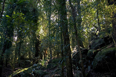 Sunlight in Forest, Springbrook National Park - Queensland, Australia