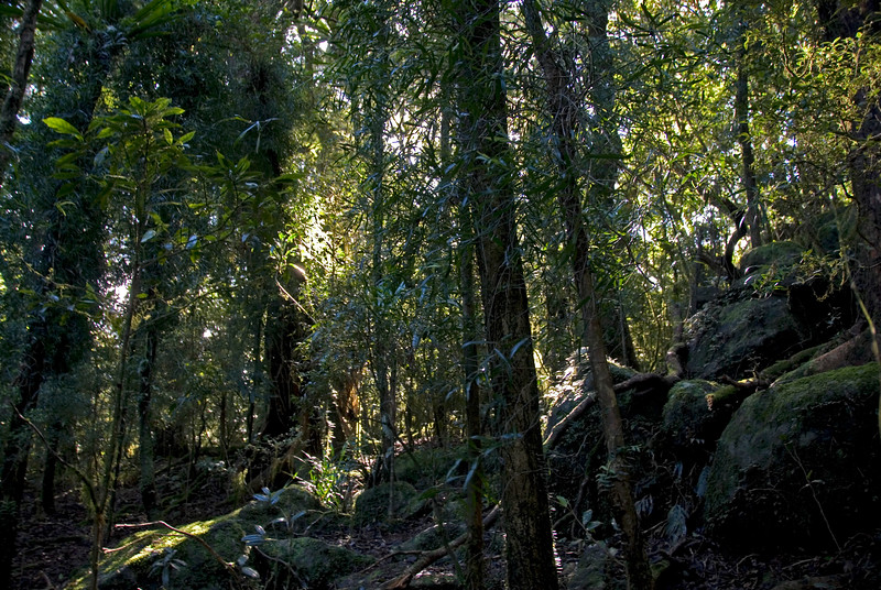 Sunlight in Forest, Springbrook National Park - Queensland, Australia