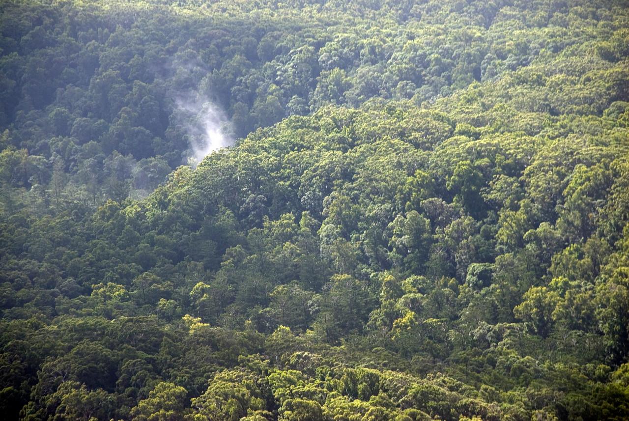 Smoke In The Rainforest, Fraser Island - Queensland, Australia