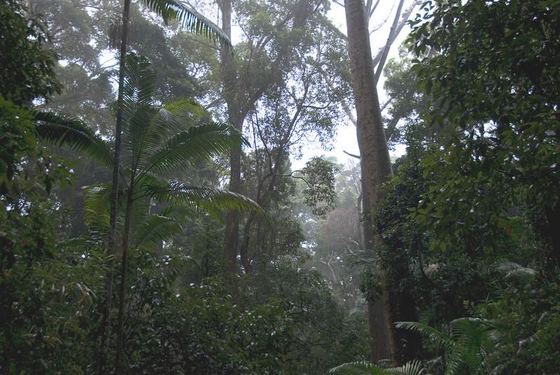 Rainforest Scene 4, Fraser Island - Queensland, Australia