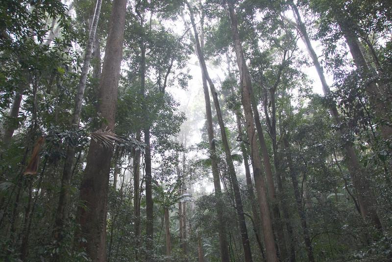 Rainforest Scene 5, Fraser Island - Queensland, Australia
