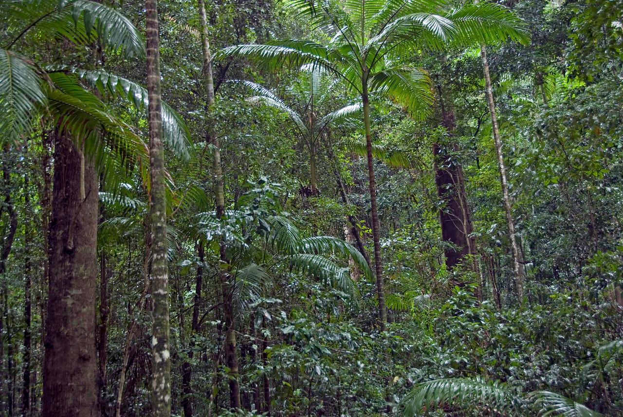 Rainforest Scene 3, Fraser Island - Queensland, Australia