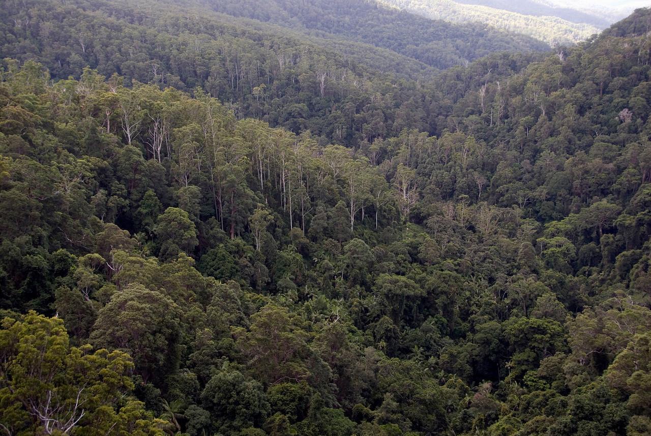 Treetops 1, Springbrook National Park - Queensland, Australia
