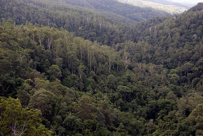 Treetops 1, Springbrook National Park - Queensland, Australia