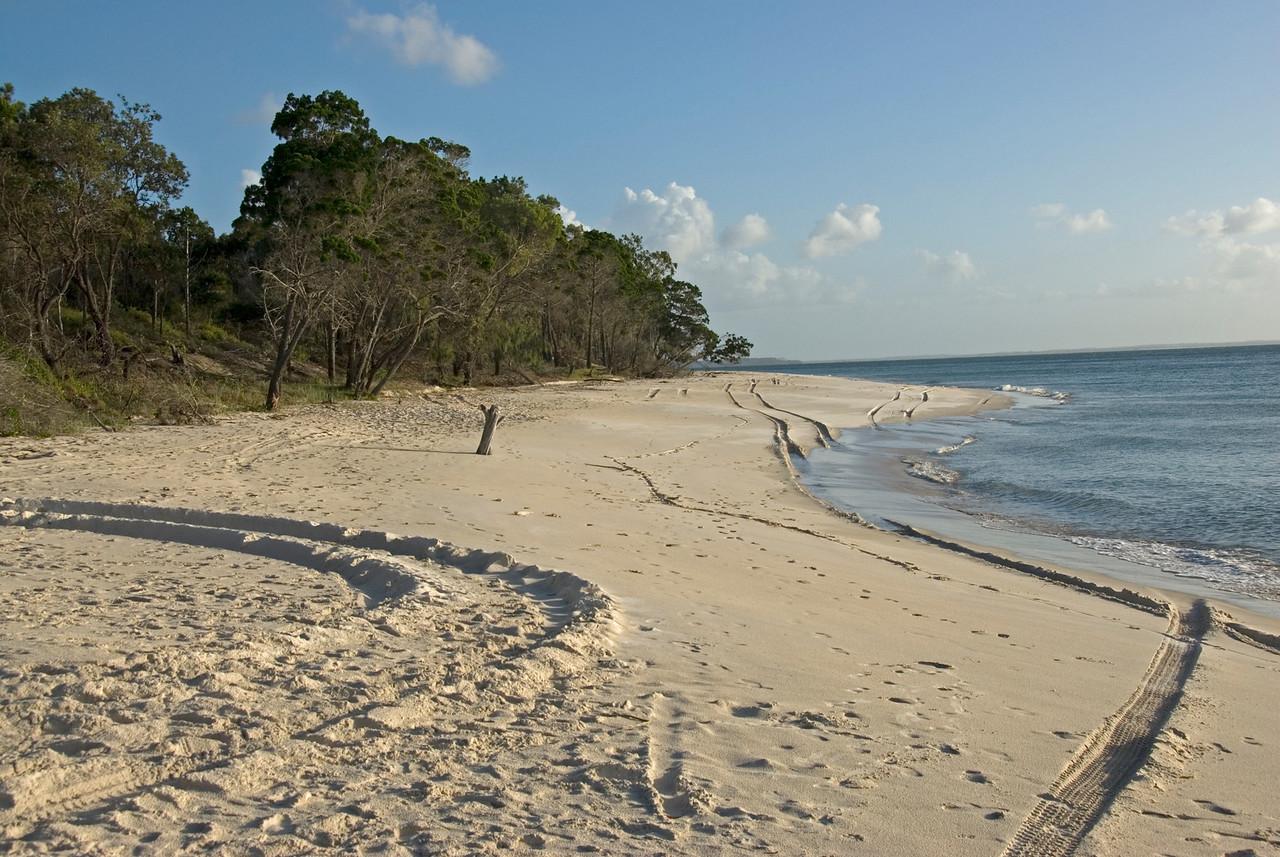 Tire Tracks on Beach 2, Fraser Island - Queensland, Australia