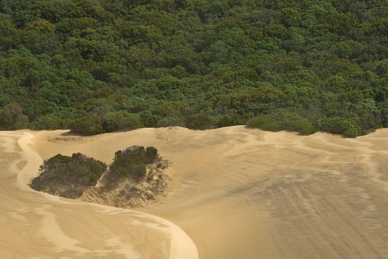 Sand Meets Forest From Air, Fraser Island - Queensland, Australia
