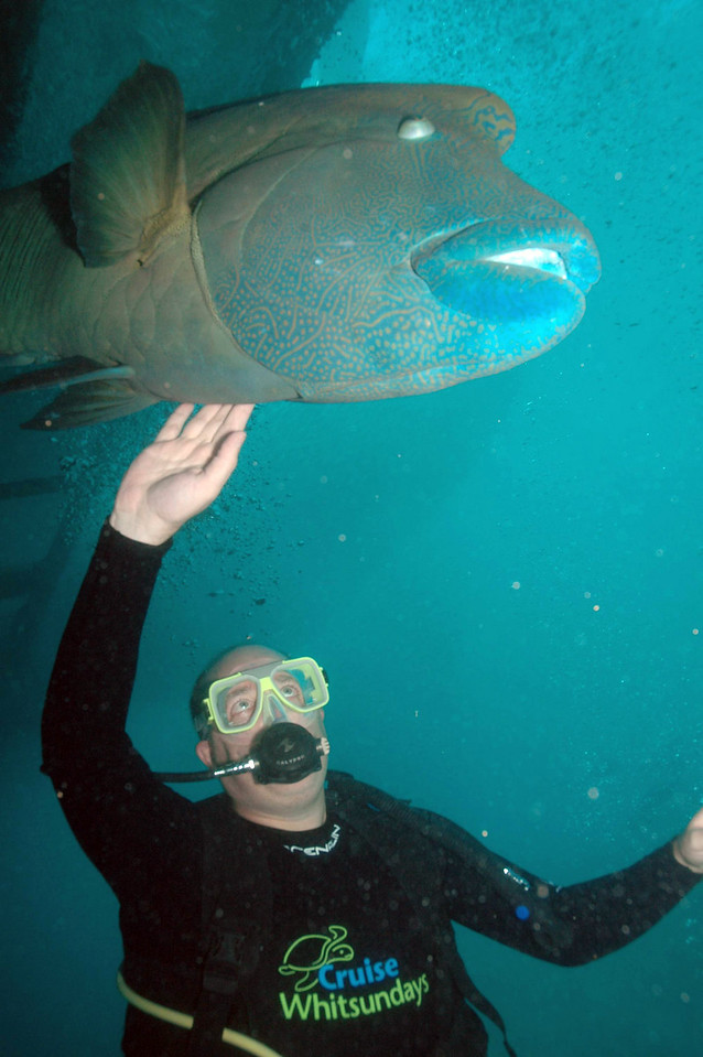 Me and Giant Wrasse 2