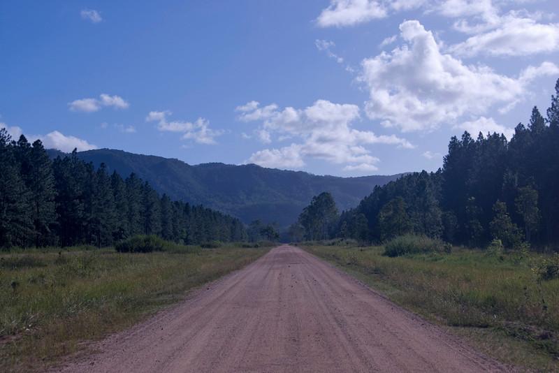 Forest Road - Queensland, Australia