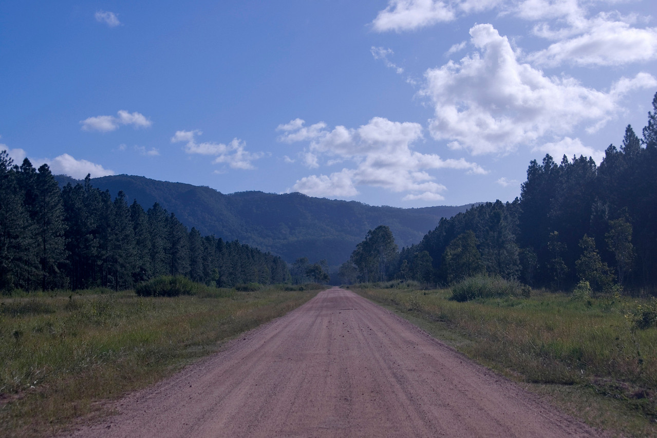 Forest Road - Queensland, Australia