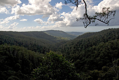 Vista 1, Springbrook National Park - Queensland, Australia