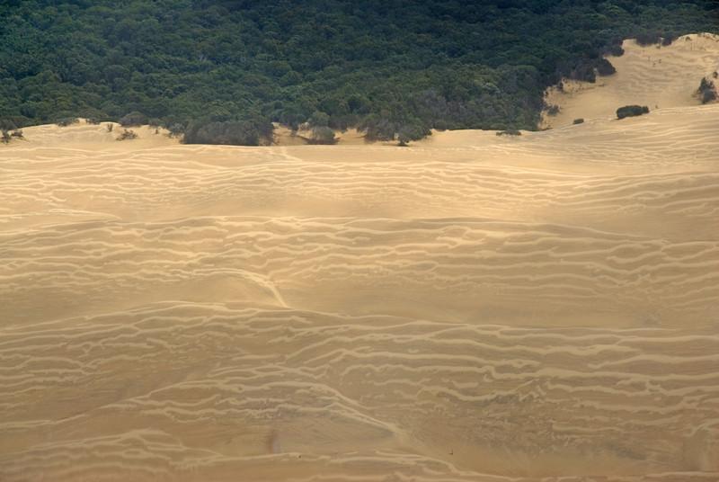 Sand Dunes 5, Fraser Island - Queensland, Australia