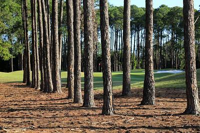 Sanctuary Cove Golf Club  (The Pines), Queensland, Australia