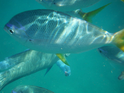 Snorkling in the Whitsundays