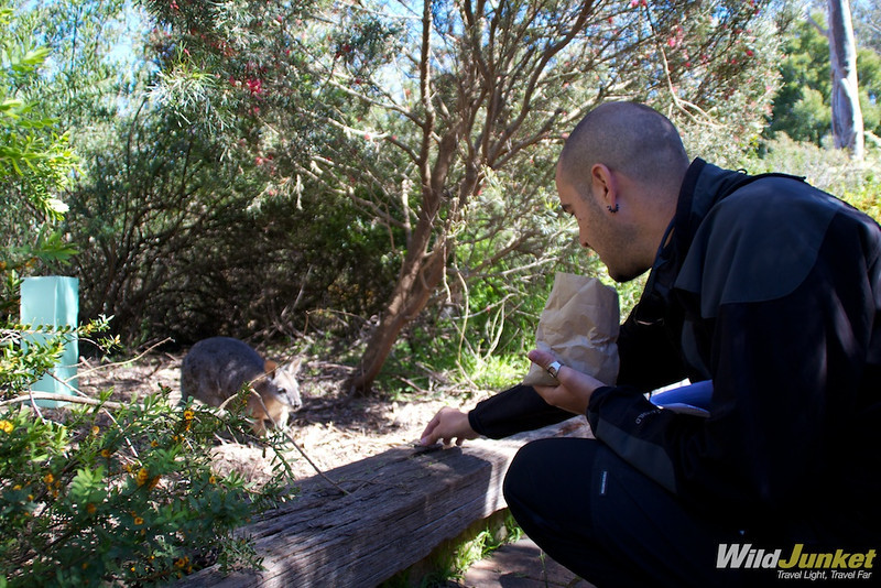 Alberto feeding the wallabies