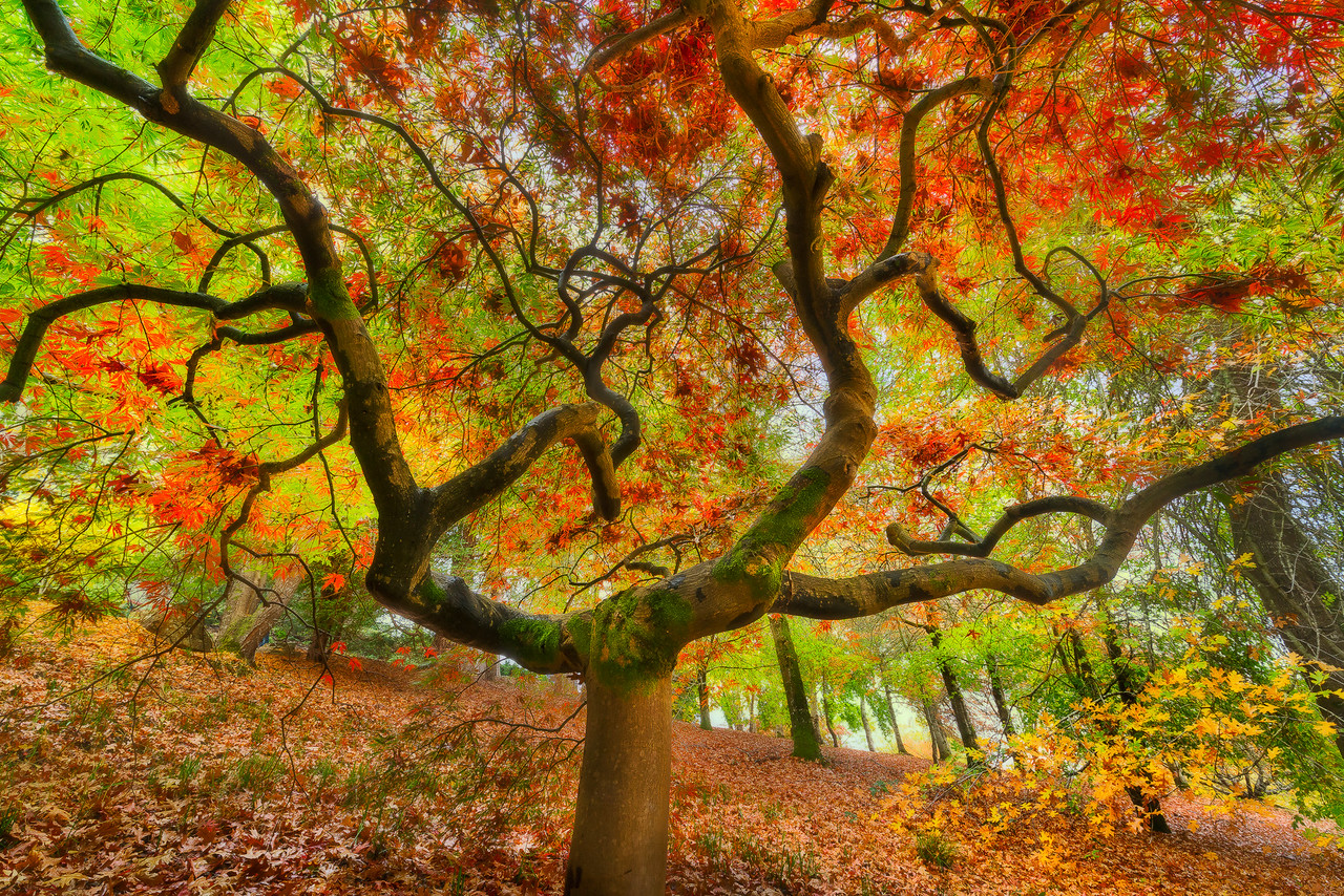 Autumn Colors at Mount Loft Botanic Gardens