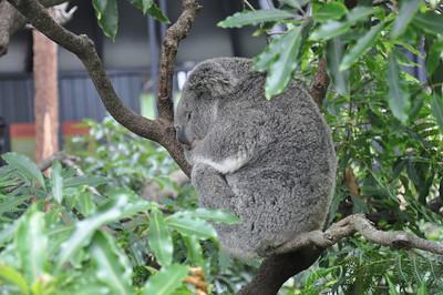 Toranaga Zoo - Sydney