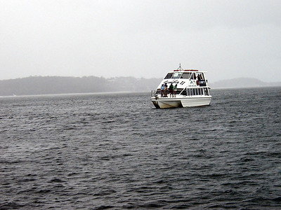 12  Port Stephens Dolphin Cruise
