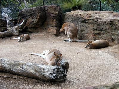 05  Taronga Zoo - Sydney