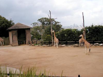 24  Taronga Zoo - Sydney