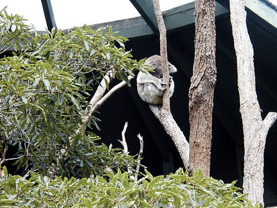 19   Taronga Zoo - Sydney