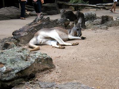 06  Taronga Zoo - Sydney