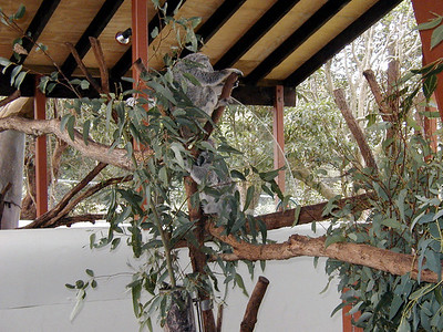 09  Toronga Zoo - Sydney