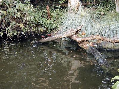 11   Taronga Zoo - Sydney