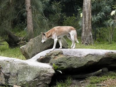 15   Taronga Zoo - Sydney
