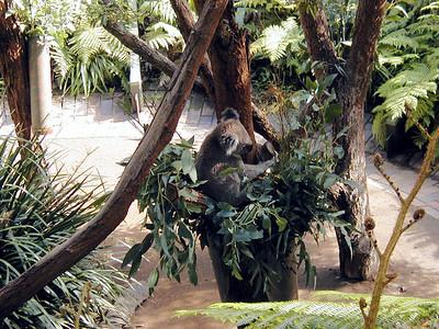 20   Taronga Zoo - Sydney