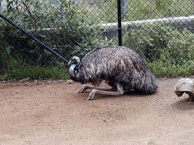 07  Taronga Zoo - Sydney