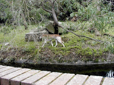 17  Taronga Zoo - Sydney