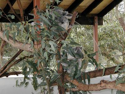 10  Taronga Zoo - Sydney