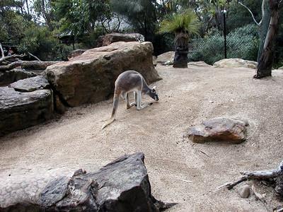 04  Taronga Zoo - Sydney