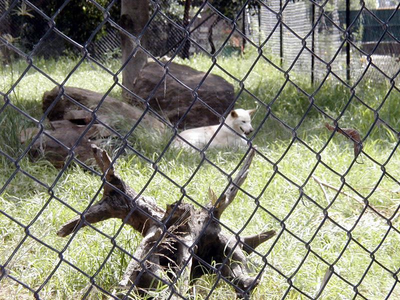 13  Wonderland and Australian Wildlife Park