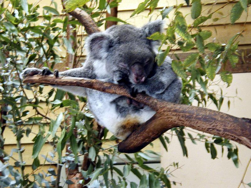 08  Wonderland and Australian Wildlife Park