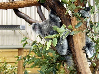 10  Wonderland and Australian Wildlife Park
