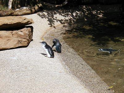 19  Wonderland and Australian Wildlife Park