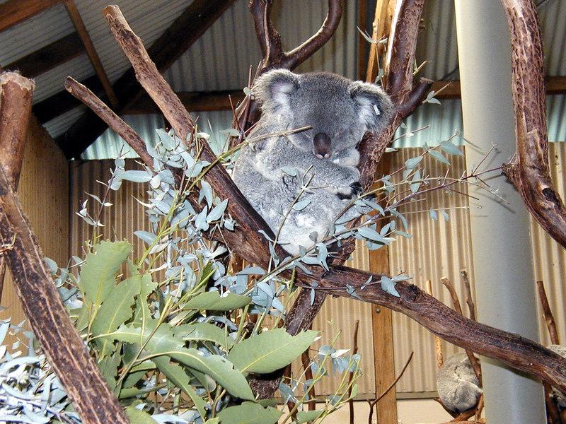 12  Wonderland and Australian Wildlife Park