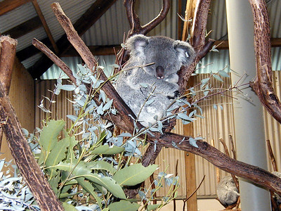 12  Wonderland and Australian Wildlife Park