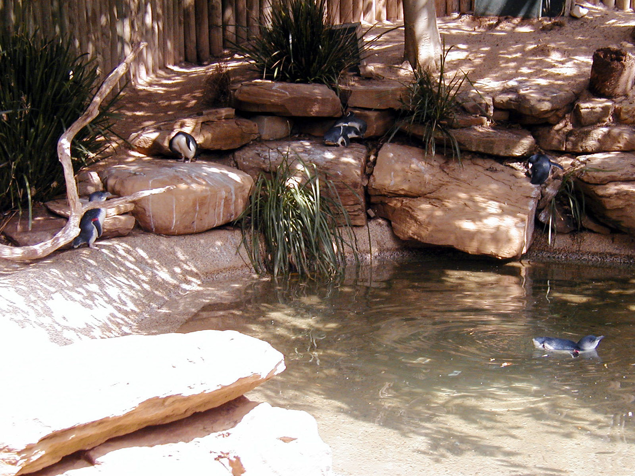 15  Wonderland and Australian Wildlife Park